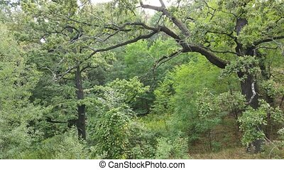 aérien, summer., vert, vue, ukraine, forêt