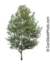a, único, árvore.