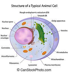 a, 典型, 细胞, 贴上标签, eps10