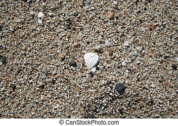 a, 分開, a, 殼, 在沙子中
