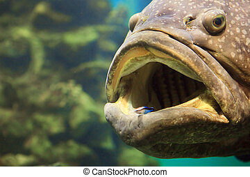 a, 大きい, fish