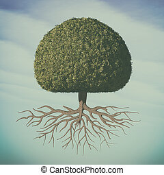 a, 完美, 树
