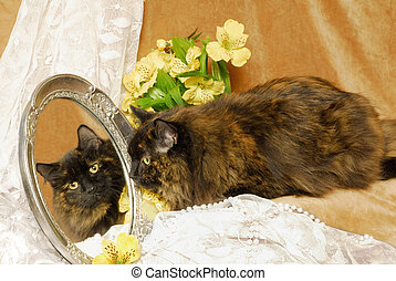 a, 暗い, さらさ 猫, 中に, ∥, 鏡