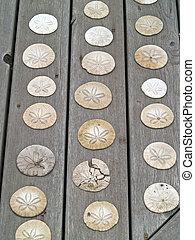 a, 束, 沙子美元, 上, a, 木製的板