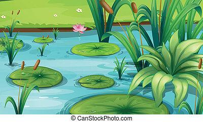 a, 池, ∥で∥, 多数, 植物