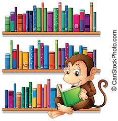 a, 猴子, 閱讀, 前面, the, 書架