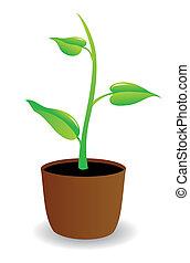 a, 盆栽植物, 開始, 到, grow.
