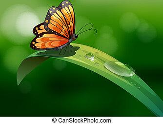 a, 蝶, の上, a, 葉, ∥で∥, 水滴