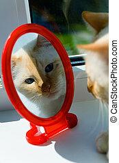 a, 赤, ねこ, 顔つき, 中に, ∥, 鏡。