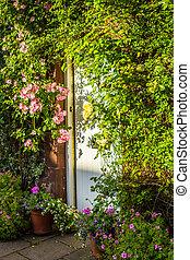a, 門, 由于, 粉紅色, 攀登, 玫瑰