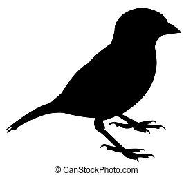 a, 麻雀, 黑色半面畫像
