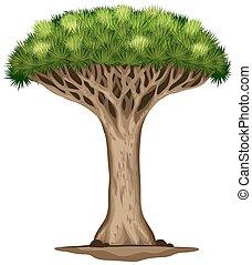 a, 龍, 血液, 樹