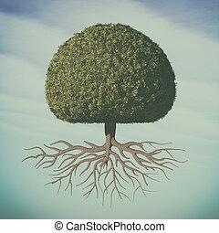a, 완전한, 나무