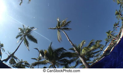 a, 카메라, 놓인다, 수중 사진, 에서, a, 수영 풀, 얇은껍질, 그만큼, 하늘, 와..., 손바닥,...
