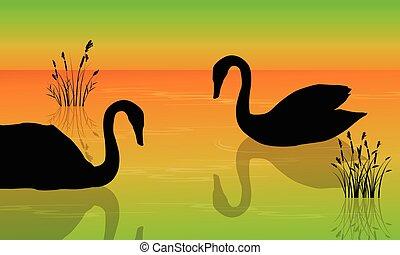 a, alba, cigno, su, il, lago, scenario, silhouette