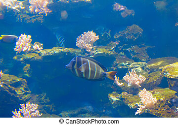 A anemonefish in colorful anemone