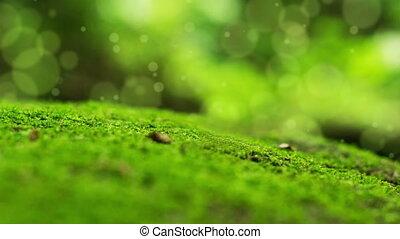 A animated Moss Bokeh Dot Background