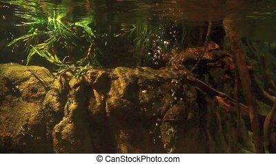 Aquarium - A Aquarium background.