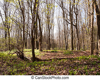 a, bündel, bäume, mitte, von, a, wald