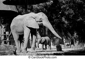 A baby and mother african elephant