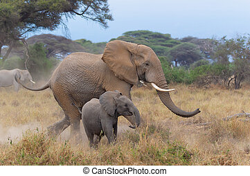 A Baby Elephant Running To Keep Up With Its Mother