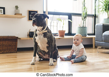 Baby girl sitting with pitbull on the floor