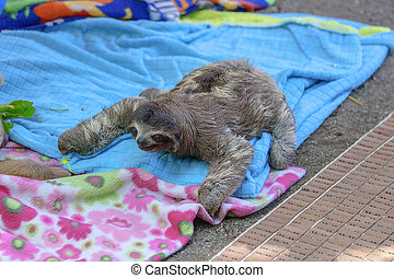 A baby sloth on colorful blankets