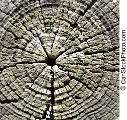 wooden tree ring - a background from many wooden tree rings