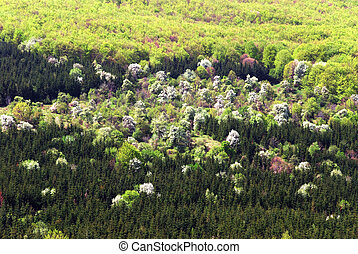 forest in bloom