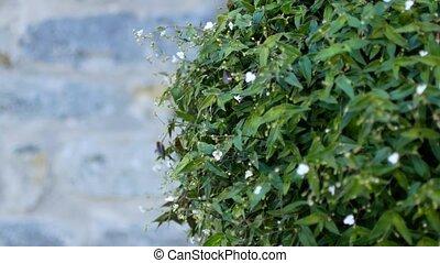 background of beautiful greenery - a background of beautiful...