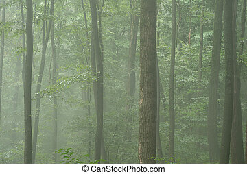 A Background of Trees in the Mist