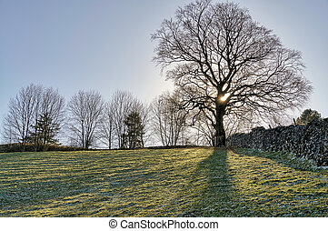 A backlit tree in the corner of a sloping field.
