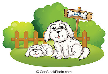 A backyard with two cute dogs