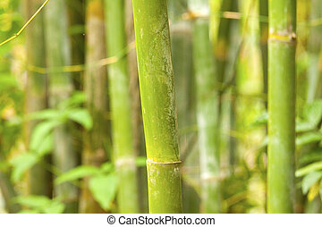 A bamboo grove background