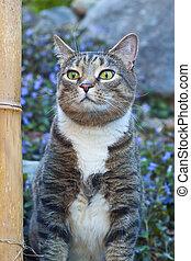 a, bambu, e, a, gato