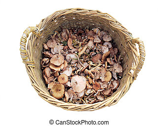 A basket of mushrooms.