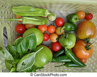 A basket of Vegetables grown in home garden