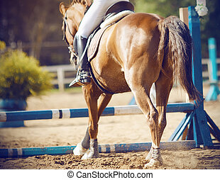 A Bay horse with a rider in the saddle is going to jump over the blue barrier