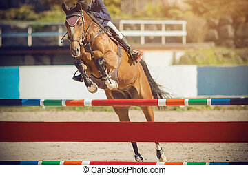 A Bay horse with a rider in the saddle jumps over a high barrier