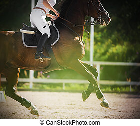 A bay racehorse gallops quickly with rider in the saddle on the sandy arena, illuminated by the warm summer sunlight. Horse riding. Show jumping.