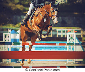 A Bay racehorse jumps over a high barrier, participating in show jumping competitions on a Sunny summer day.