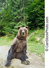 A bear sits on earth in a forest.