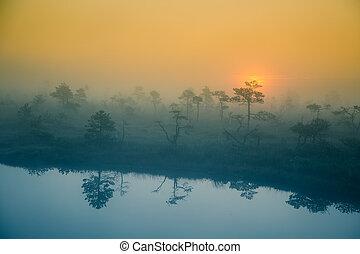a, beau, rêveur, matin, paysage, de, soleil, levée, dans, a, brumeux, swamp.