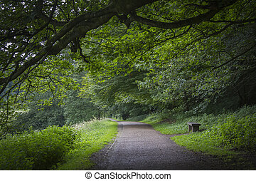 A beautiful and tranquill country lane in yorkshire