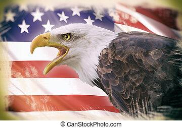 a beautiful bald eagle with a background of a usa flag