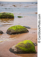 A beautiful beach landscape with a green moss covered...