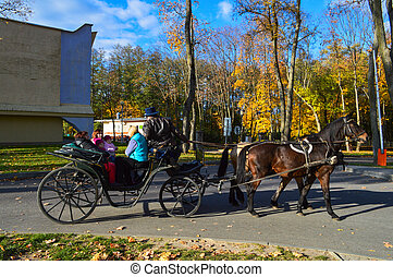 A beautiful black strong horse in harness pulls the carriage in the park on an asphalt road