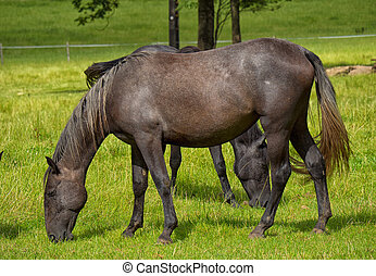 beautiful brown horse in a meadow