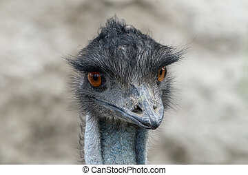 close up emu portrait