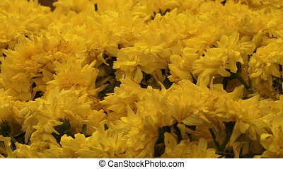 A beautiful close up of yellow flowers